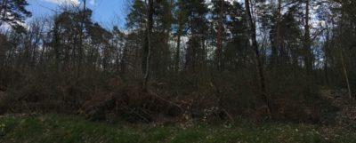 Beau terrain au calme dans la campagne de Brantôme. Terrain Boisé et constructible.Sans vis à vis