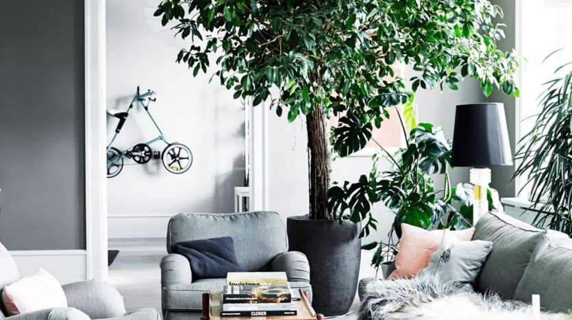 la-nature-est-au-coeur-du-salon-scandinave-maisons-aliénor-périgord-constructeur-maisons-individuelles